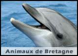 Animaux de Bretagne