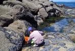 La pêche à pieds à Douarnenez