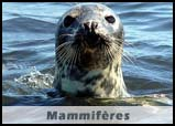 Mammifères de Bretagne