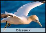 Oiseaux de Bretagne